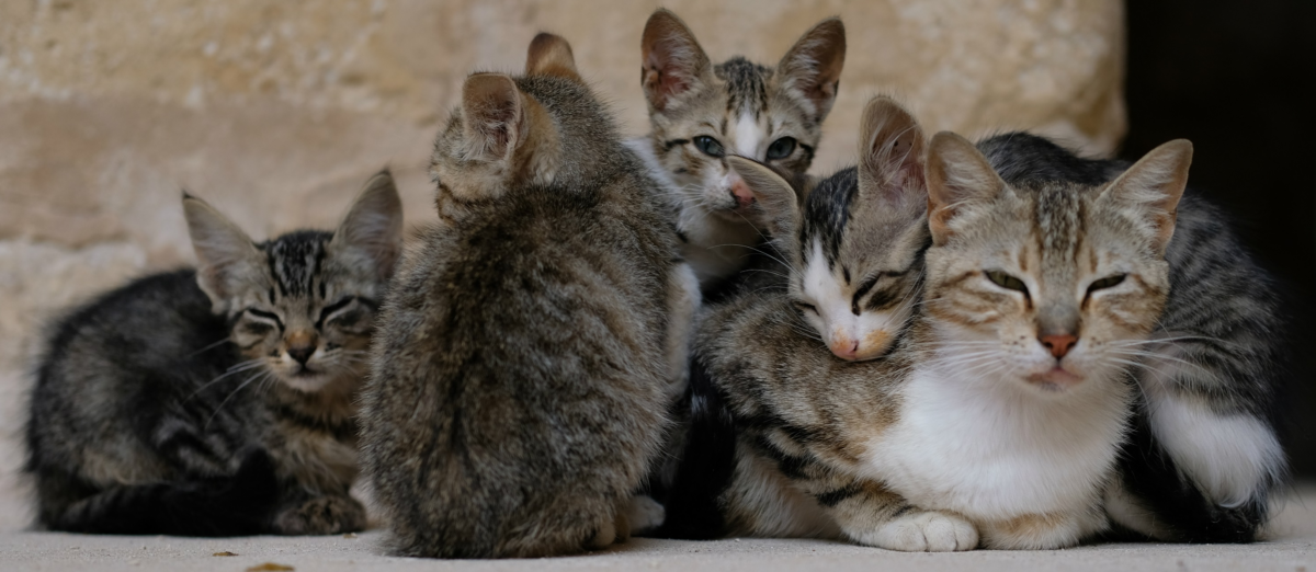 Popular cats. Photo: Alisdare Hickson, Flickr